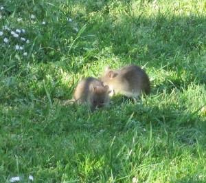 Même les souris sont à leur aise